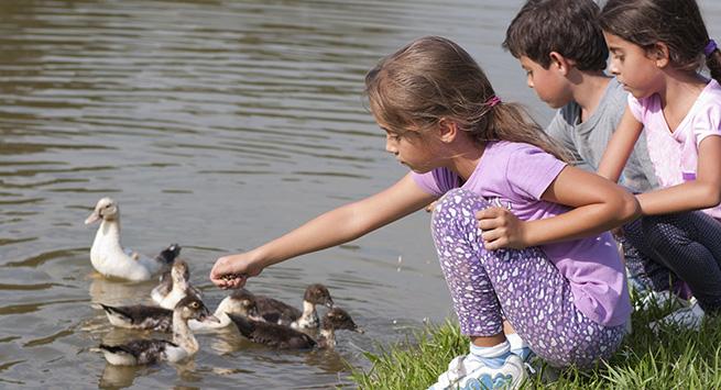 children at duck pond