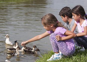 children with ducks by pond